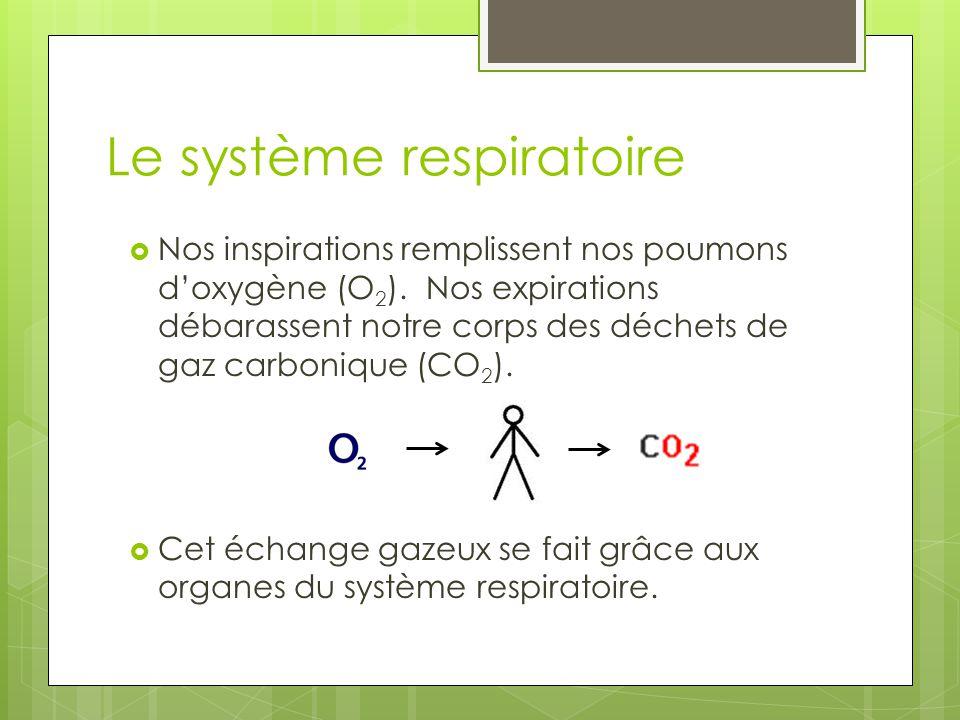  Nos inspirations remplissent nos poumons d'oxygène (O 2 ). Nos expirations débarassent notre corps des déchets de gaz carbonique (CO 2 ).  Cet écha