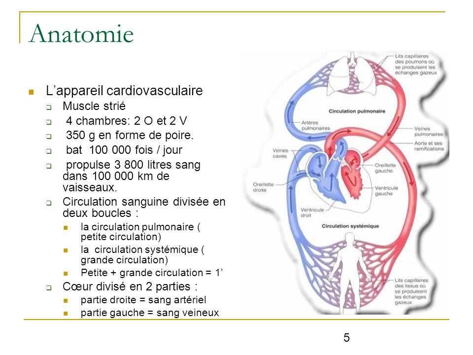Großzügig Anatomie Und Physiologie Powerpoint Präsentationen Bilder ...