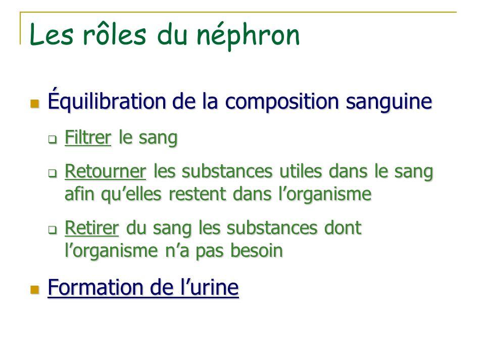 Les rôles du néphron Équilibration de la composition sanguine Équilibration de la composition sanguine  Filtrer le sang  Retourner les substances ut