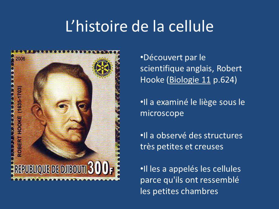 L'histoire de la cellule Découvert par le scientifique anglais, Robert Hooke (Biologie 11 p.624) Il a examiné le liège sous le microscope Il a observé des structures très petites et creuses Il les a appelés les cellules parce qu ils ont ressemblé les petites chambres