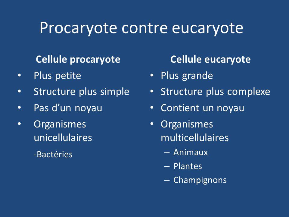 Procaryote contre eucaryote Cellule procaryote Plus petite Structure plus simple Pas d'un noyau Organismes unicellulaires -Bactéries Cellule eucaryote Plus grande Structure plus complexe Contient un noyau Organismes multicellulaires – Animaux – Plantes – Champignons