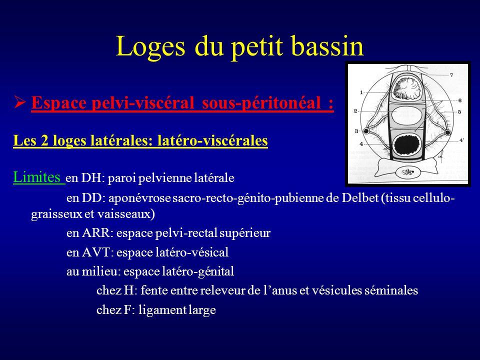 Loges du petit bassin  Espace pelvi-viscéral sous-péritonéal : Les 2 loges latérales: latéro-viscérales Limites en DH: paroi pelvienne latérale en DD