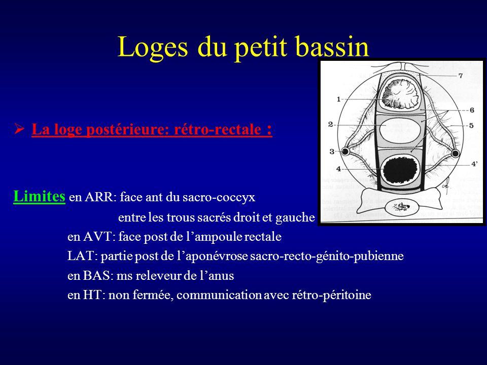 Loges du petit bassin  La loge postérieure: rétro-rectale : Limites en ARR: face ant du sacro-coccyx entre les trous sacrés droit et gauche en AVT: f