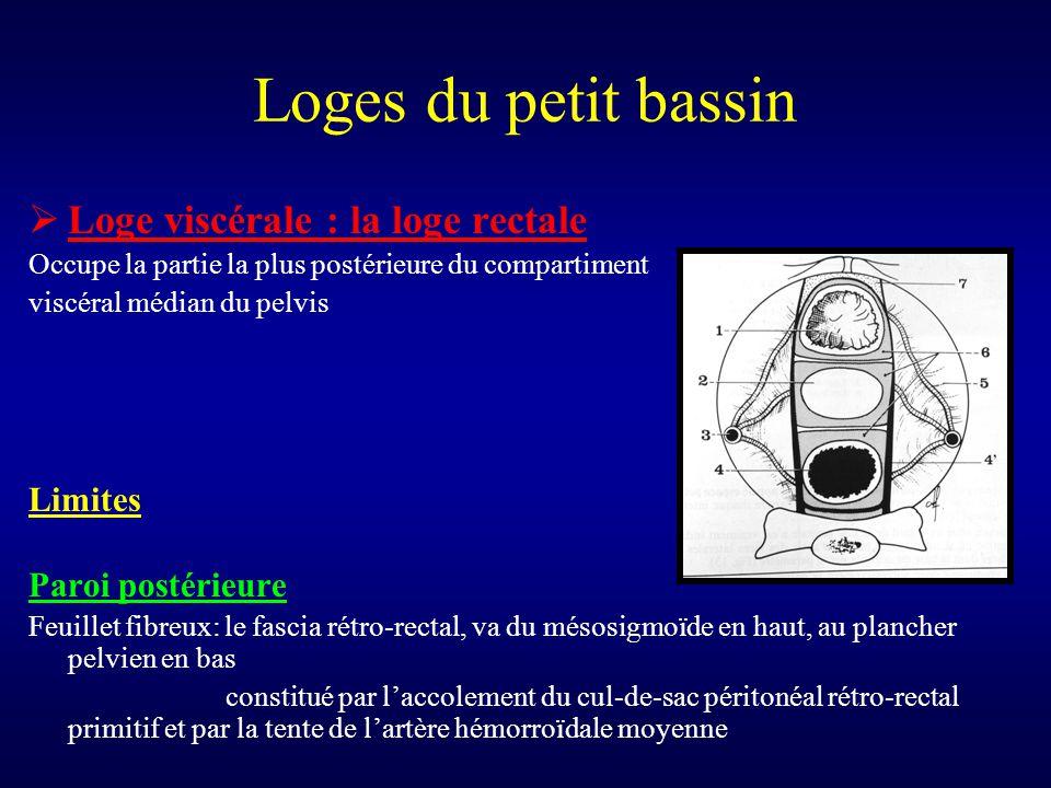 Loges du petit bassin  Loge viscérale : la loge rectale Occupe la partie la plus postérieure du compartiment viscéral médian du pelvis Limites Paroi
