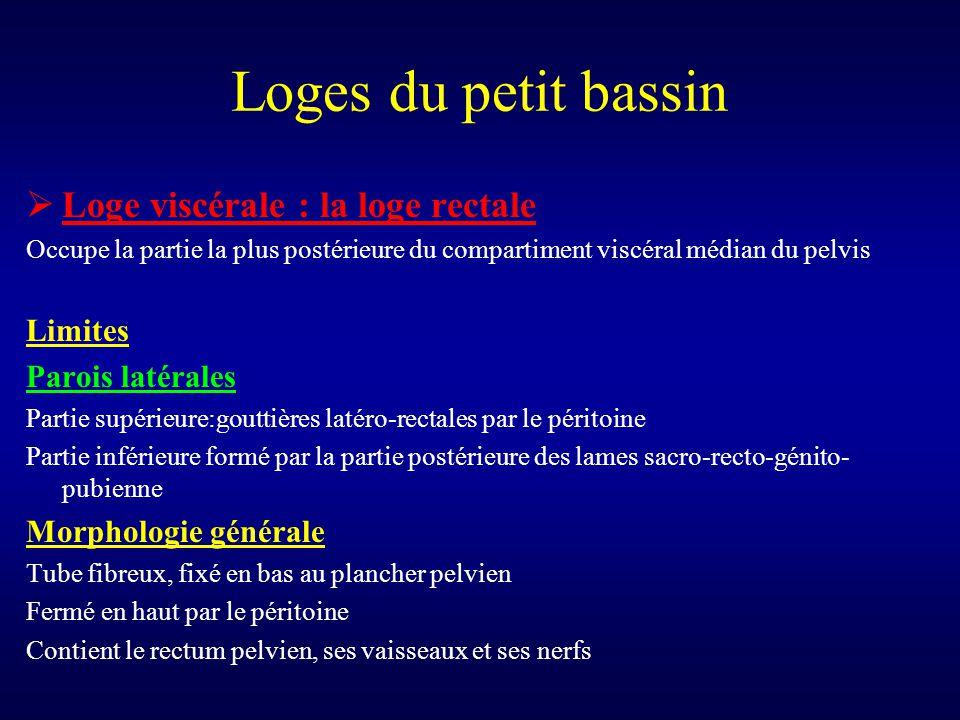 Loges du petit bassin  Loge viscérale : la loge rectale Occupe la partie la plus postérieure du compartiment viscéral médian du pelvis Limites Parois