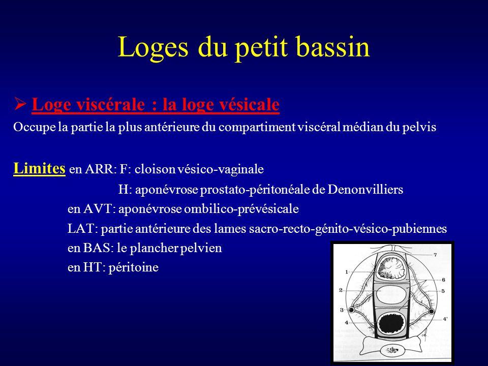 Loges du petit bassin  Loge viscérale : la loge vésicale Occupe la partie la plus antérieure du compartiment viscéral médian du pelvis Limites en ARR