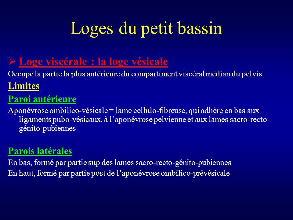 Loges du petit bassin  Loge viscérale : la loge vésicale Occupe la partie la plus antérieure du compartiment viscéral médian du pelvis Limites Paroi
