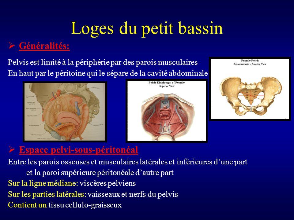  Généralités: Pelvis est limité à la périphérie par des parois musculaires En haut par le péritoine qui le sépare de la cavité abdominale  Espace pe