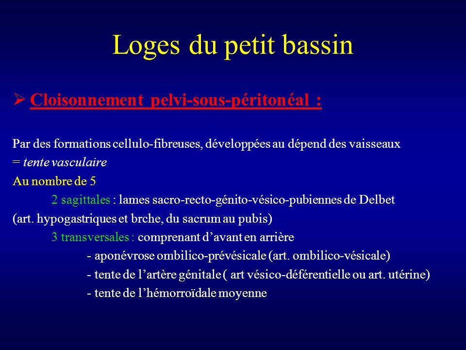 Loges du petit bassin  Cloisonnement pelvi-sous-péritonéal : Par des formations cellulo-fibreuses, développées au dépend des vaisseaux = tente vascul