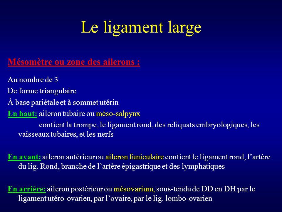 Le ligament large Mésomètre ou zone des ailerons : Au nombre de 3 De forme triangulaire À base pariétale et à sommet utérin En haut: aileron tubaire o