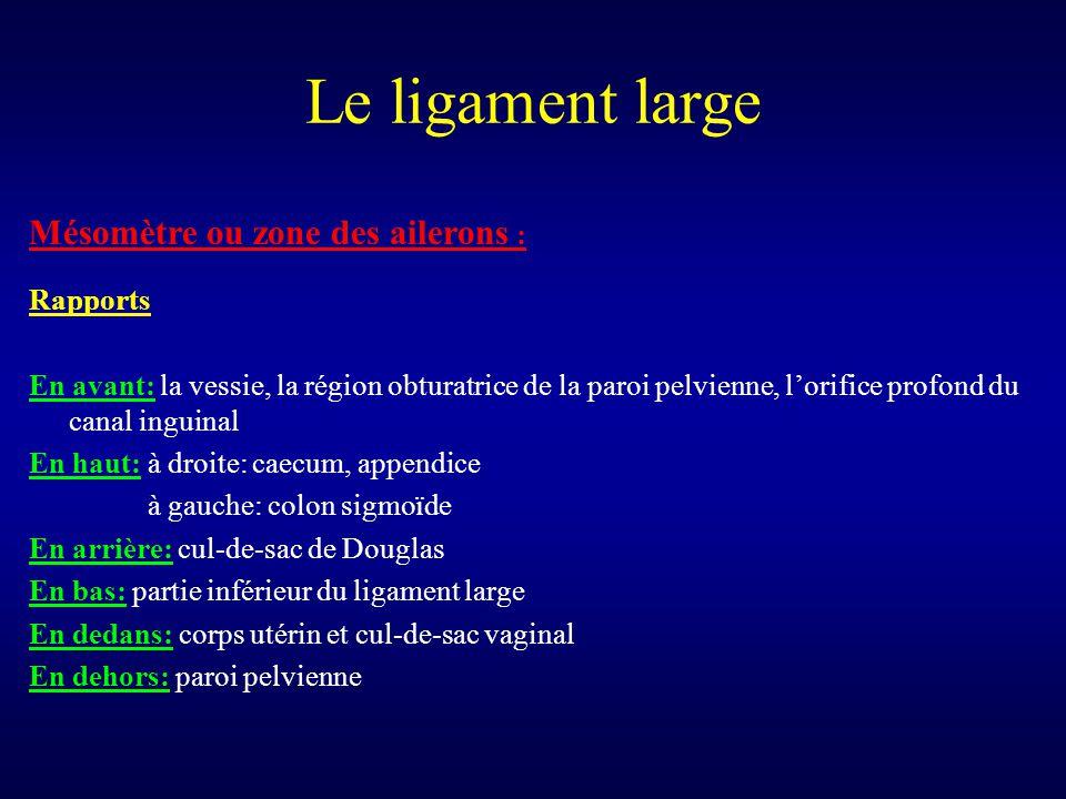 Le ligament large Mésomètre ou zone des ailerons : Rapports En avant: la vessie, la région obturatrice de la paroi pelvienne, l'orifice profond du can