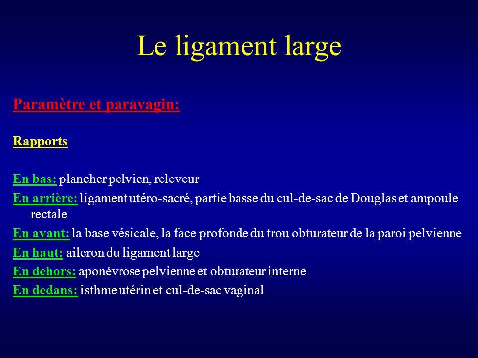 Le ligament large Paramètre et paravagin: Rapports En bas: plancher pelvien, releveur En arrière: ligament utéro-sacré, partie basse du cul-de-sac de