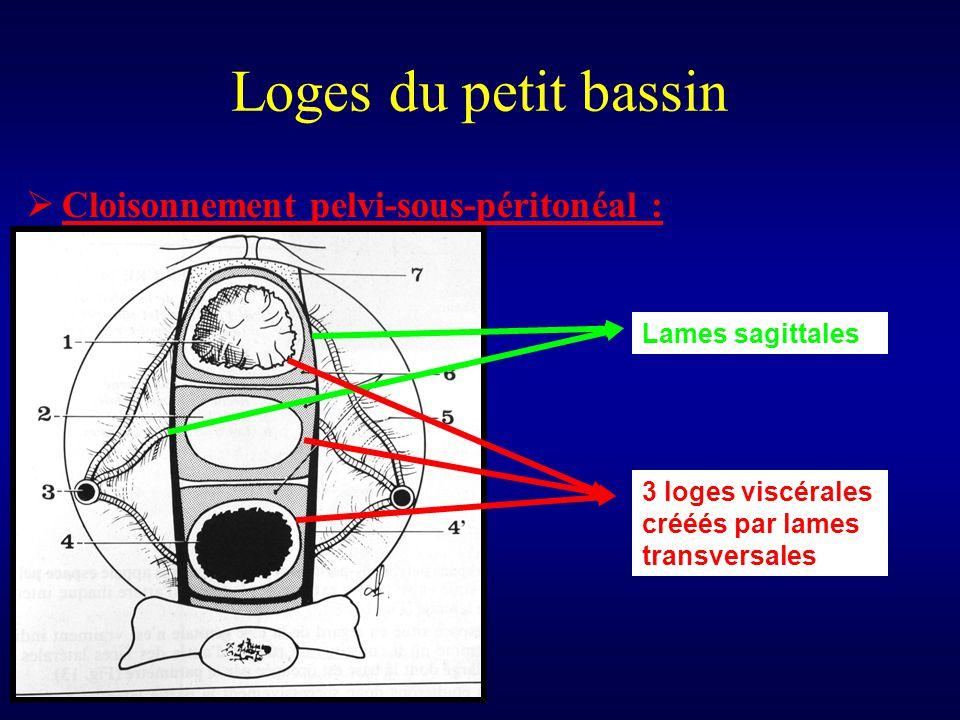 Loges du petit bassin  Cloisonnement pelvi-sous-péritonéal : Lames sagittales 3 loges viscérales crééés par lames transversales