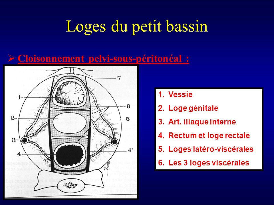Loges du petit bassin  Cloisonnement pelvi-sous-péritonéal : 1.Vessie 2.Loge génitale 3.Art. iliaque interne 4.Rectum et loge rectale 5.Loges latéro-