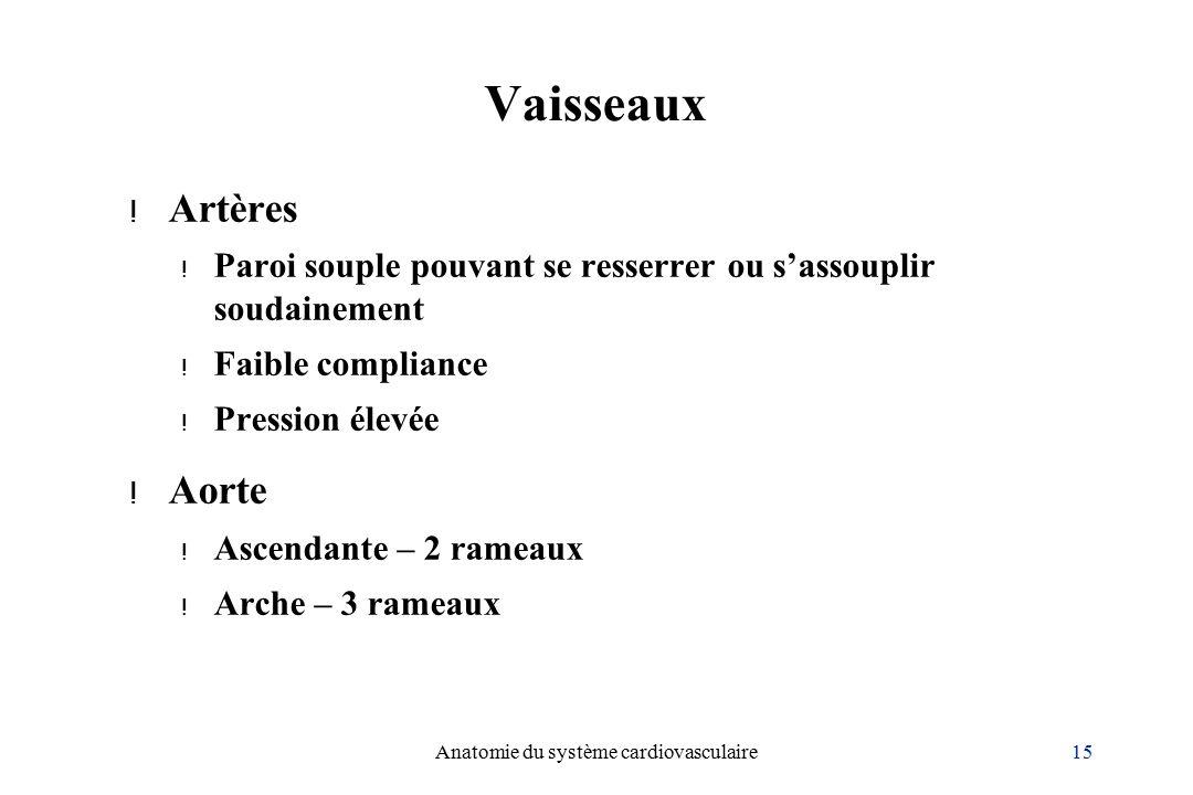 15Anatomie du système cardiovasculaire Vaisseaux .