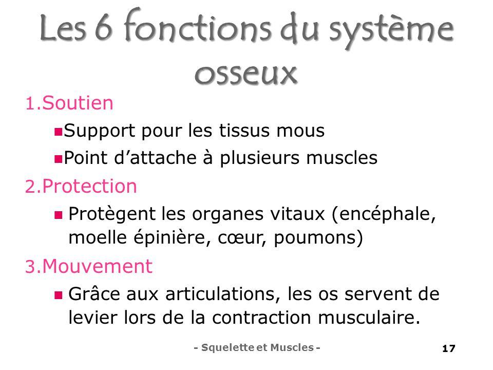 Les 6 fonctions du système osseux 1.