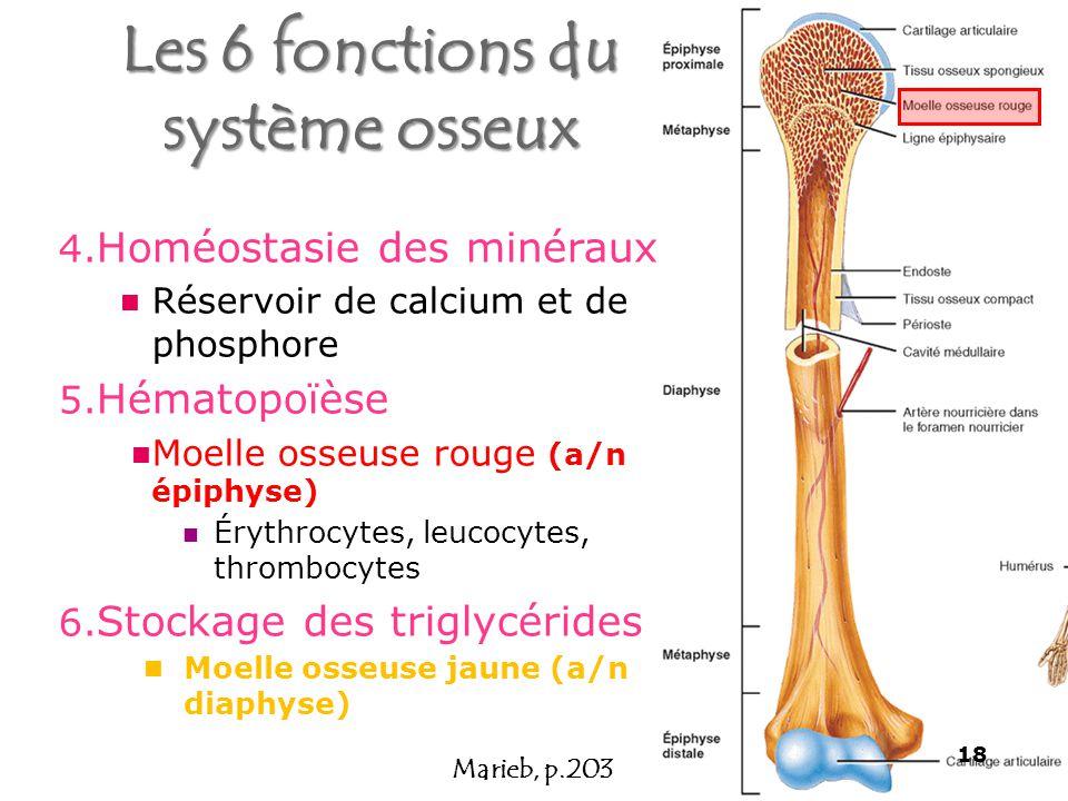 4.Homéostasie des minéraux Réservoir de calcium et de phosphore 5.