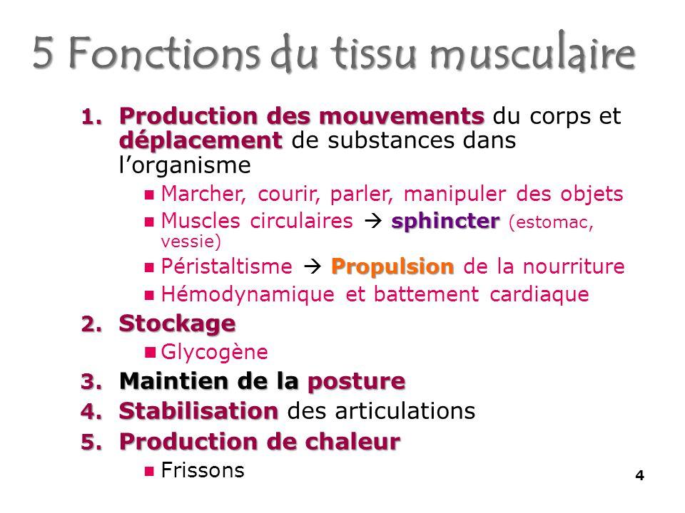 5 Fonctions du tissu musculaire 4 1.Production des mouvements déplacement 1.