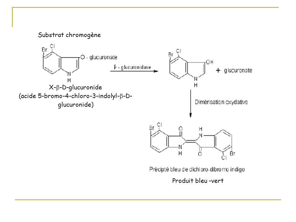 Substrat chromogène X-  -D-glucuronide (acide 5-bromo-4-chloro-3-indolyl-  -D- glucuronide) Produit bleu -vert