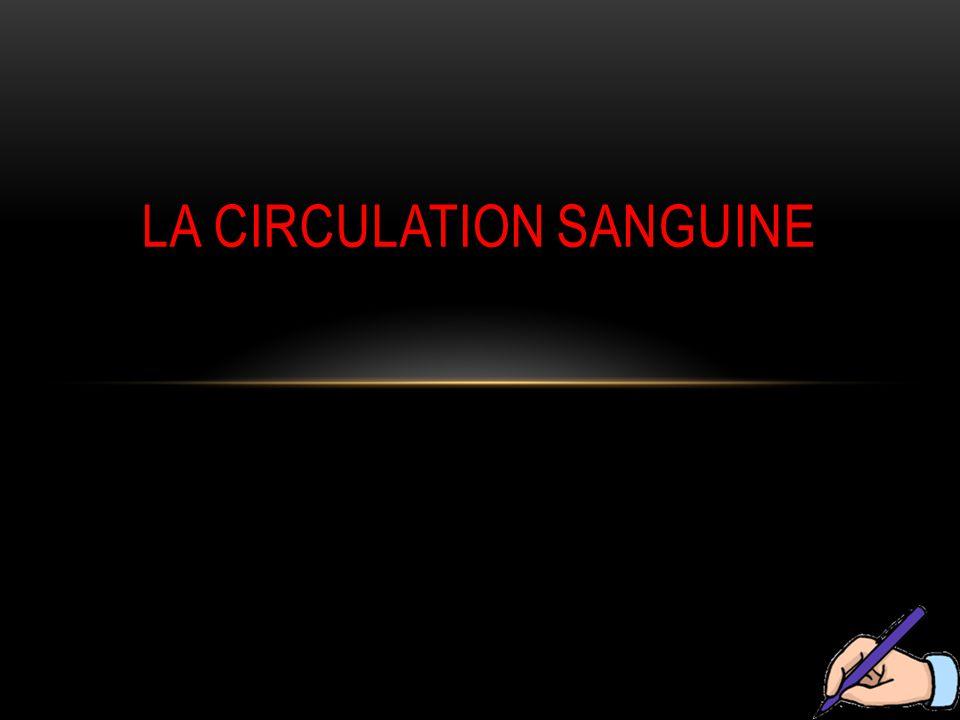 III / LA CIRCULATION SANGUINE