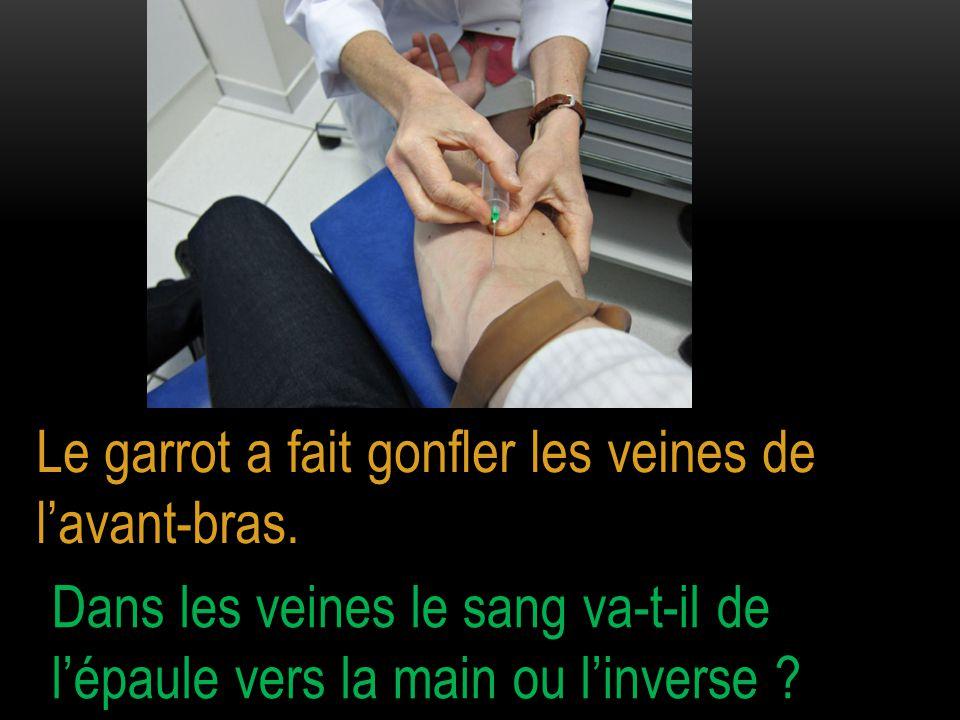 Dans les veines du bras le sang circule de la main vers l'épaule.