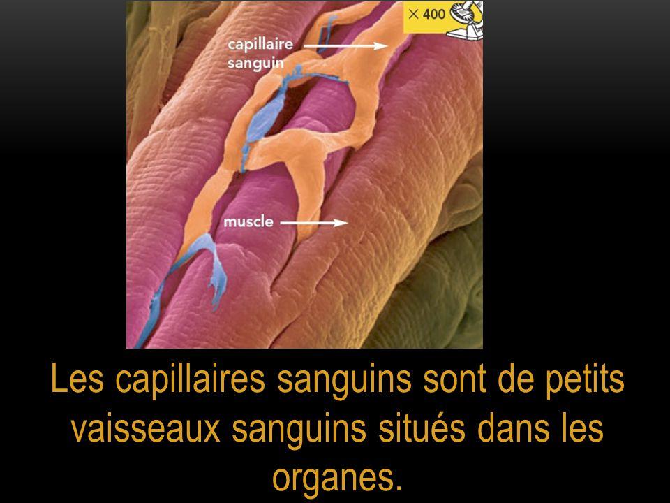 Le sang entre dans le cœur par des veines, puis passe dans une oreillette, un ventricule et ressort par une artère.