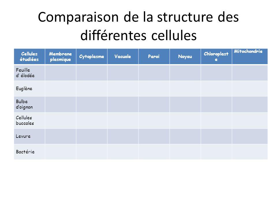 Comparaison de la structure des différentes cellules Cellules étudiées Membrane plasmique CytoplasmeVacuoleParoiNoyau Chloroplast e Mitochondrie Feuil