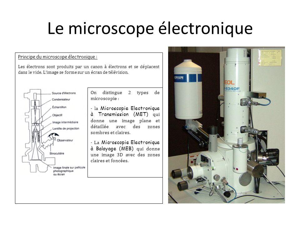 Le microscope électronique Principe du microscope électronique : Les électrons sont produits par un canon à électrons et se déplacent dans le vide. L'