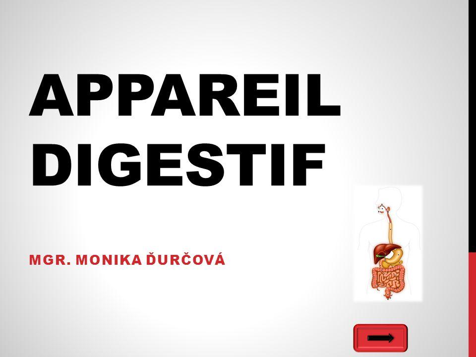 APPAREIL DIGESTIF MGR. MONIKA ĎURČOVÁ