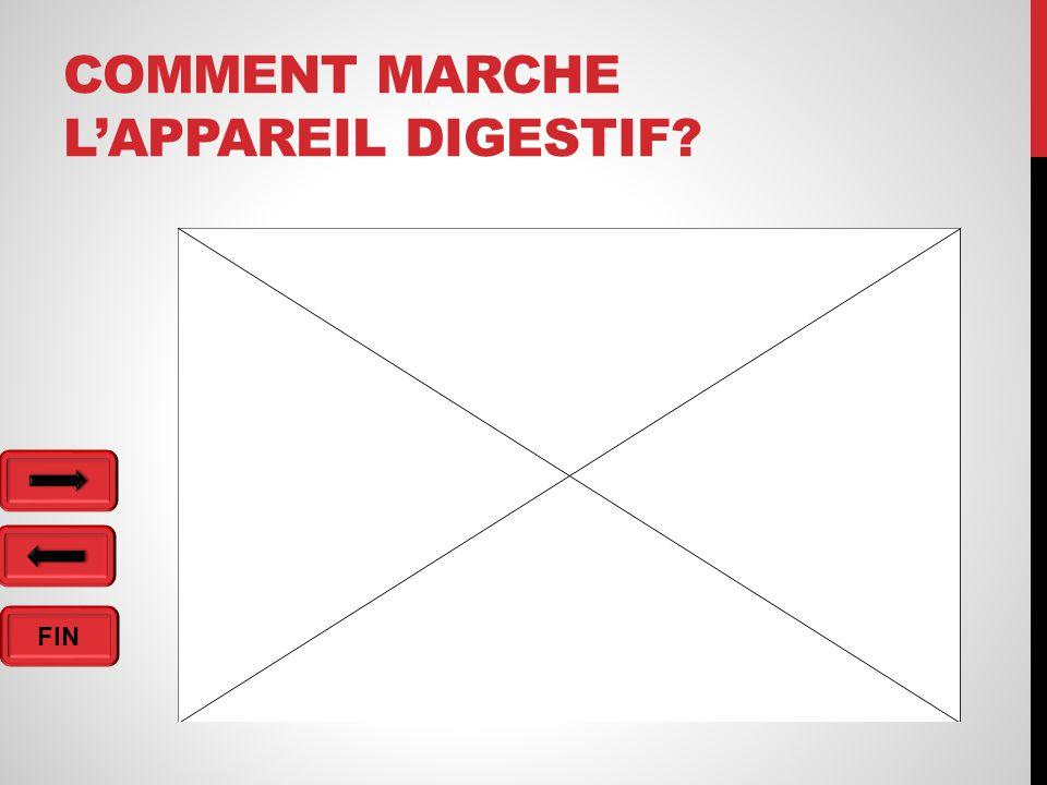 FIN COMMENT MARCHE L'APPAREIL DIGESTIF?