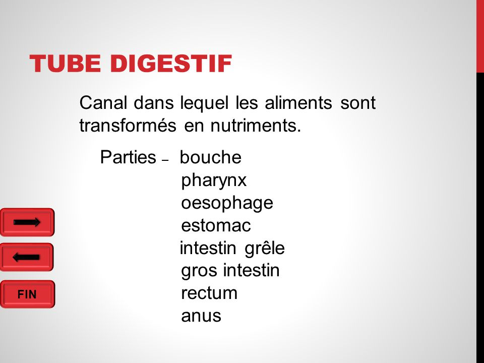 FIN TUBE DIGESTIF Canal dans lequel les aliments sont transformés en nutriments.
