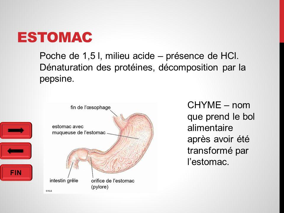 FIN ESTOMAC Poche de 1,5 l, milieu acide – présence de HCl.