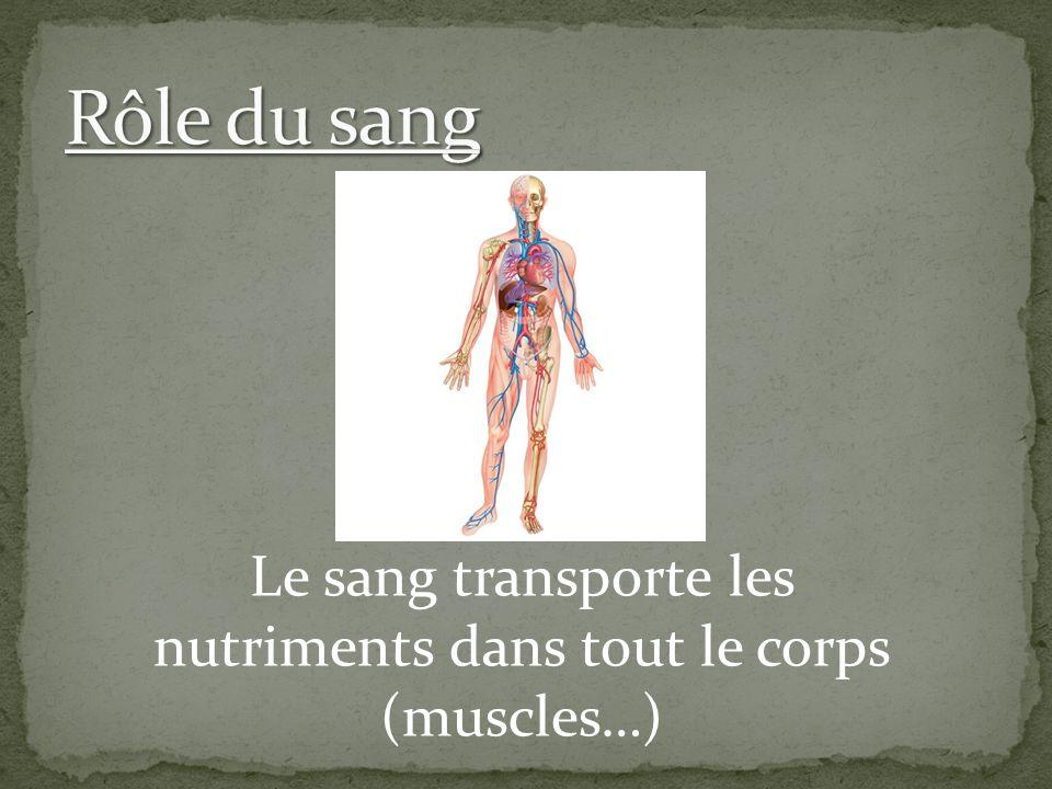 Le sang transporte les nutriments dans tout le corps (muscles…)