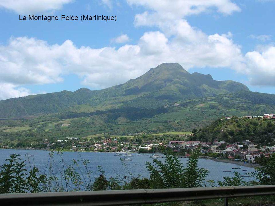 La Montagne Pelée (Martinique)