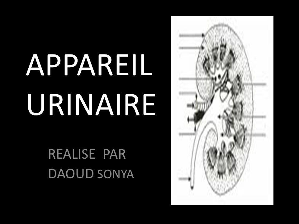 APPAREIL URINAIRE REALISE PAR DAOUD SONYA