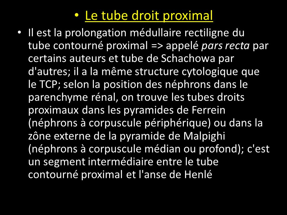 Le tube droit proximal Il est la prolongation médullaire rectiligne du tube contourné proximal => appelé pars recta par certains auteurs et tube de Schachowa par d autres; il a la même structure cytologique que le TCP; selon la position des néphrons dans le parenchyme rénal, on trouve les tubes droits proximaux dans les pyramides de Ferrein (néphrons à corpuscule périphérique) ou dans la zône externe de la pyramide de Malpighi (néphrons à corpuscule médian ou profond); c est un segment intermédiaire entre le tube contourné proximal et l anse de Henlé