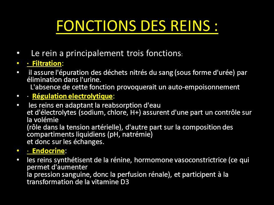 FONCTIONS DES REINS : Le rein a principalement trois fonctions : · Filtration: il assure l épuration des déchets nitrés du sang (sous forme d urée) par élimination dans l urine.