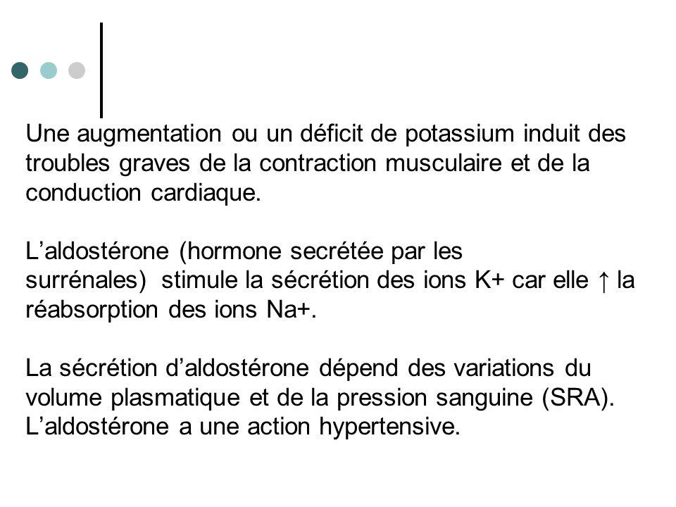 Certains éléments exogènes (certains antibiotiques) sont également éliminés par sécrétion.