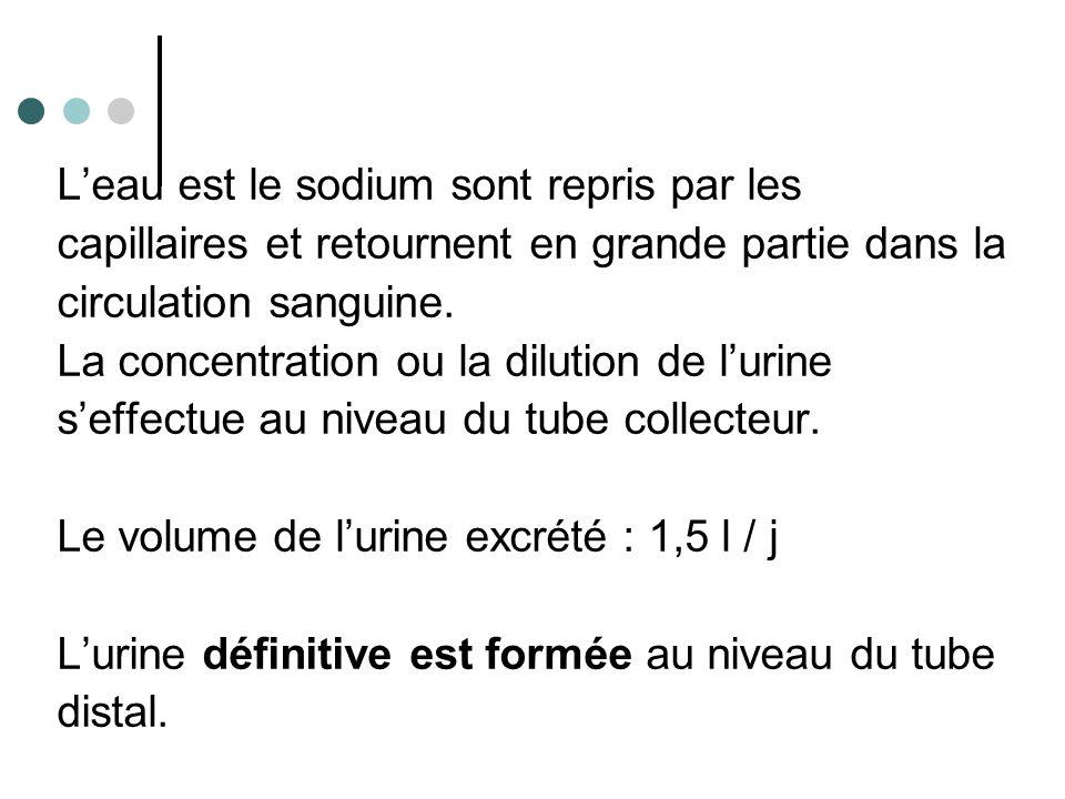 La régulation de la sécrétion urinaire dépend de trois facteurs : →La pression artérielle →Les influences hormonales →L'alimentation et les boissons