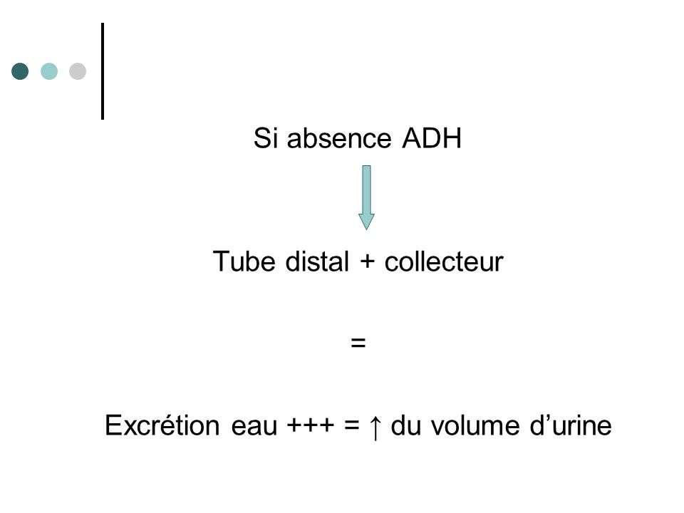 Volémie Sécrétion ADH Réabsorption d'eau Volume urinaire = urines diluées