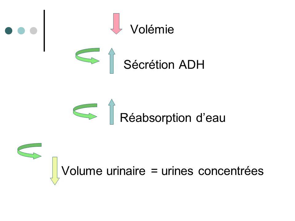 L'augmentation ou la diminution de l'eau circulante induit une baisse ou augmentation de l'osmolarité du milieu extra-cellulaire.