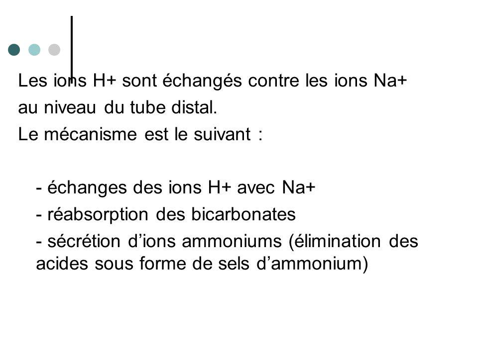 L'acidose correspond à une concentration plasmatique en ions H+ élevée.