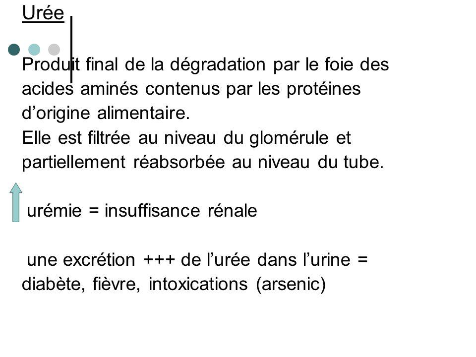 Acide urique Produit de dégradation finale des prurines (exogènes ou endogènes (usure des tissus).