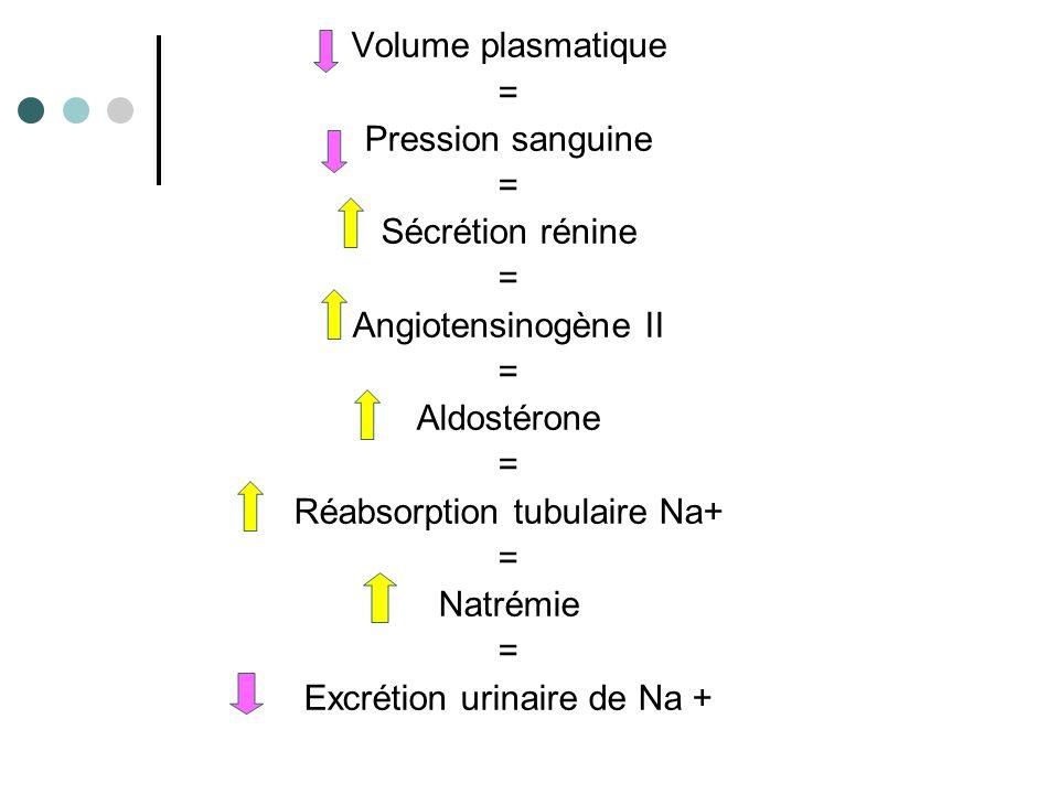Rétro-contrôles négatifs + la concentration en angiotensine II augmente plus la concentration en rénine diminue.