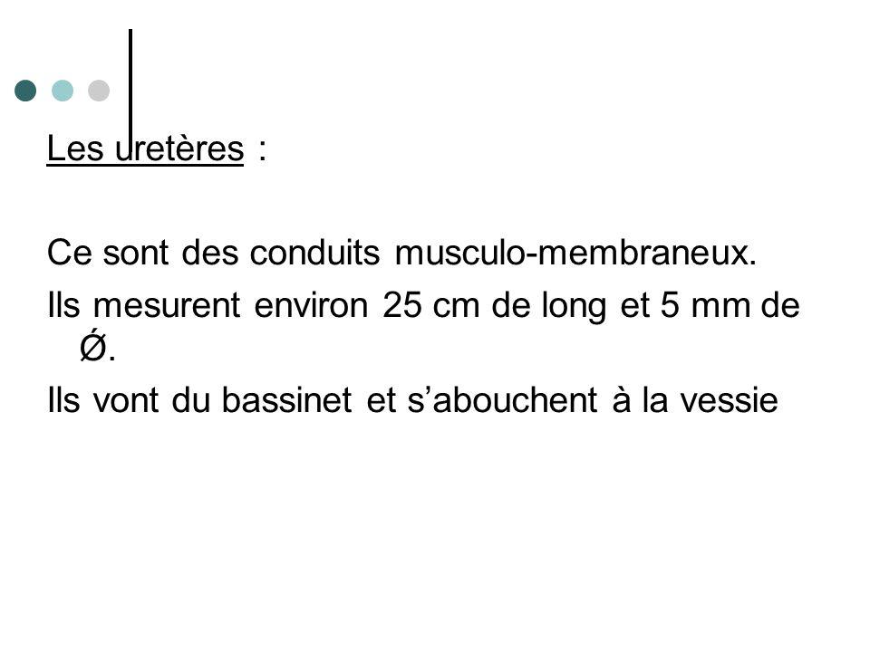 La vessie C'est un réservoir musculaire qui a la propriété de se distendre.
