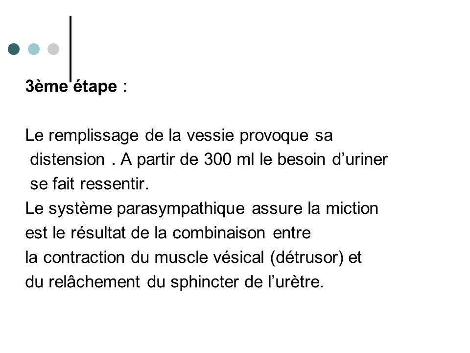 3ème étape : Le remplissage de la vessie provoque sa distension. A partir de 300 ml le besoin d'uriner se fait ressentir. Le système parasympathique a