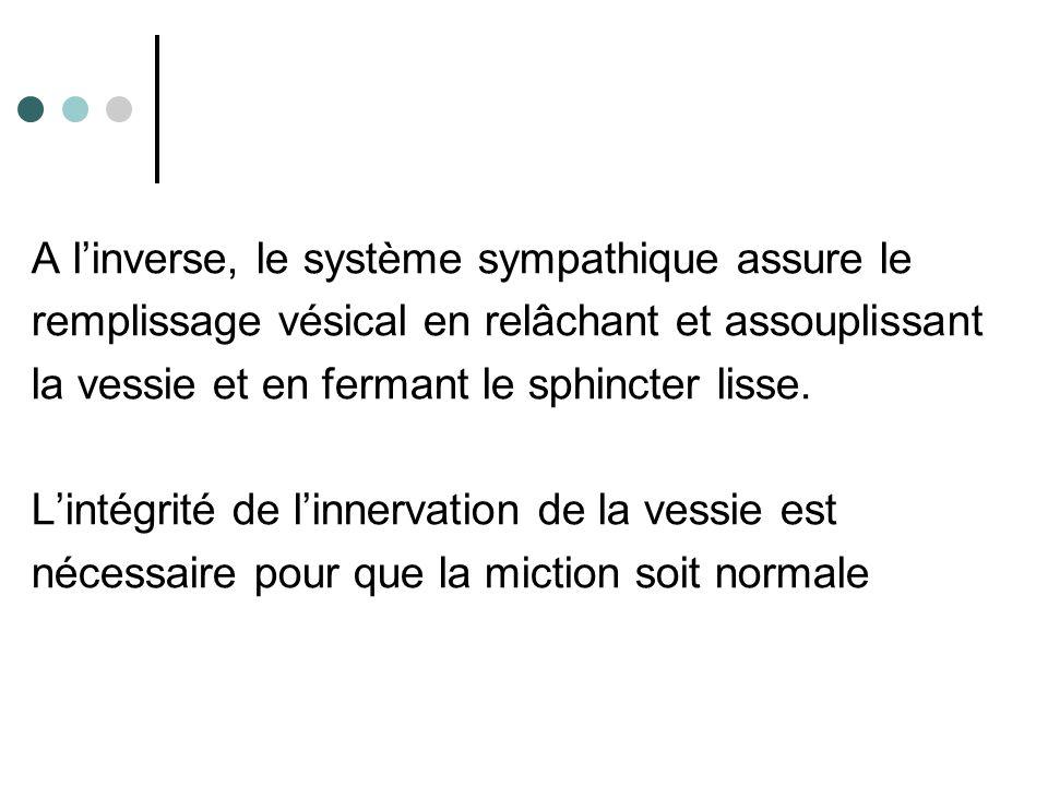 A l'inverse, le système sympathique assure le remplissage vésical en relâchant et assouplissant la vessie et en fermant le sphincter lisse. L'intégrit