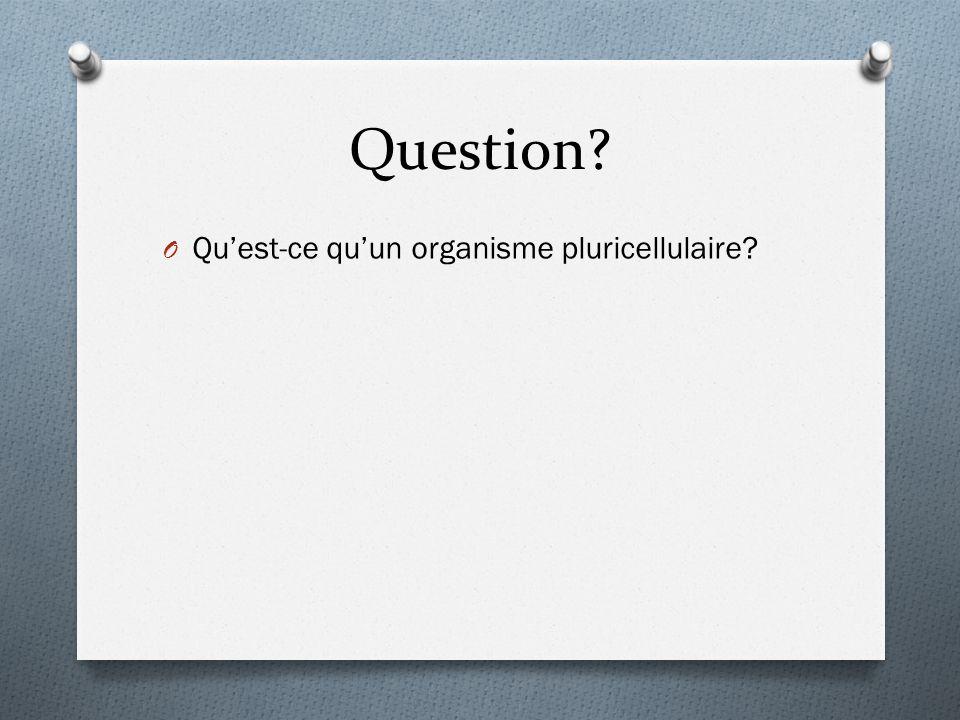 Question? O Qu'est-ce qu'un organisme pluricellulaire?