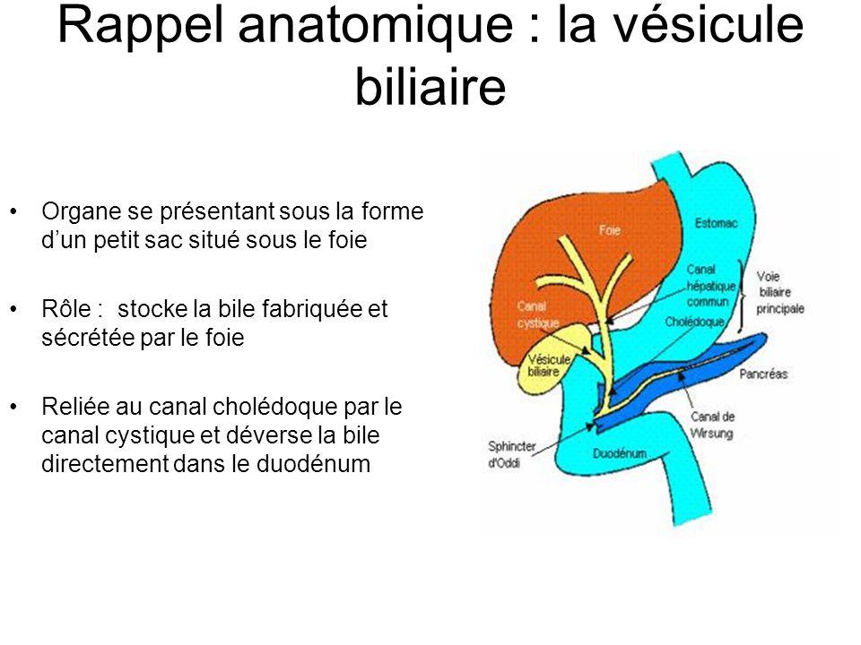 Rappel anatomique : la vésicule biliaire Organe se présentant sous la forme d'un petit sac situé sous le foie Rôle : stocke la bile fabriquée et sécrétée par le foie Reliée au canal cholédoque par le canal cystique et déverse la bile directement dans le duodénum