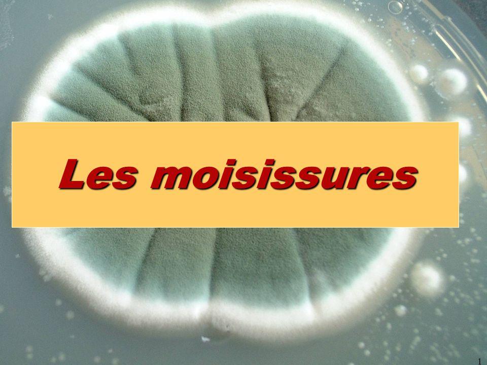 micromycètes1 Les moisissures
